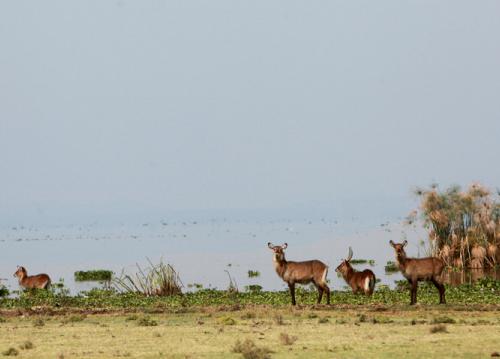 animaux kenya