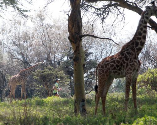 girafes trail kenya