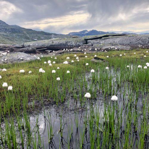 irlande lac montagne fleurs