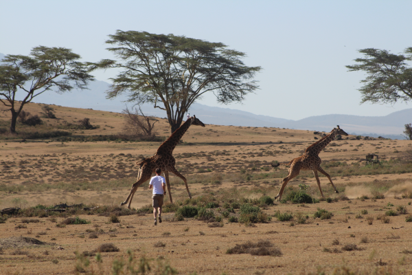 kimbia kenya girafes courses