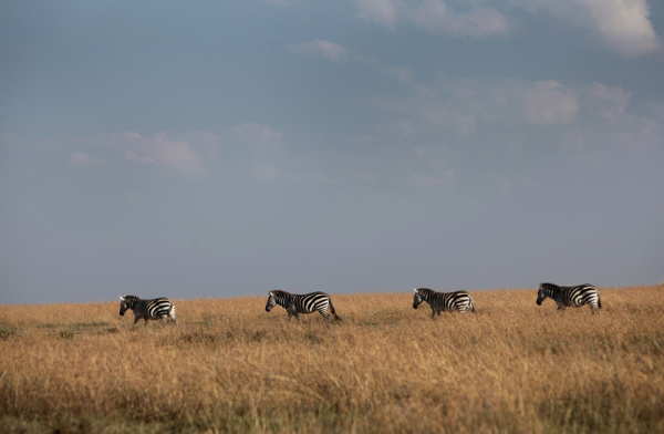 zèbres trail kenya