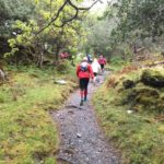 course foret irlande