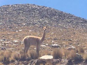 NOA-Argentina-Trail-Running